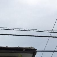 オサンポ walk - スズメ見なくね?3 we haven't seen many sparrows?