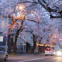 夜桜はいかが?