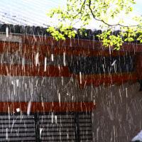 五月雨の雪  平安神宮にて