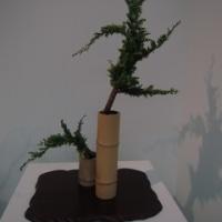 いしかわ四季の花協会展を見てきました。(5/12)NO.5