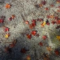 + 秋染め・・・ シュリーマンの旅行記に見る日本人の素晴らしさ