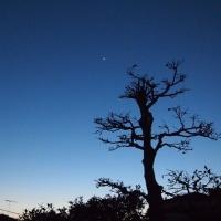 昨夕は金星の最大光度だった、けど・・・。