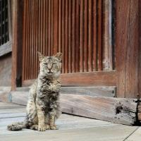 東京下町ねこ散歩Ⅹ 2016年9月 その2