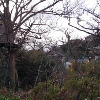 「広町緑地から極楽寺」と言う散策会に参加し、合同新年会にも参加
