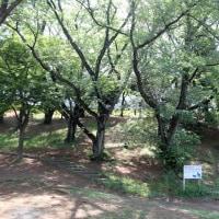 梶ヶ谷第一公園にて(4)