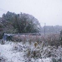 11月の降雪