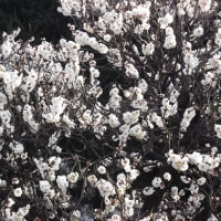 マッサージ類似の施設 2/19 (日) 朝のタイムサービス ペア割