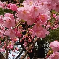 春の訪れ(*^-^*)