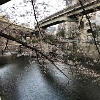 都交通局の一日乗車券と桜など