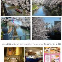 花見第2弾横浜大岡川(H29.4.12)
