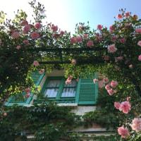 どんつきの館のバラ