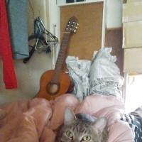 mautee作者と猫スタッフ友丹の起床