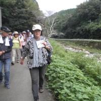 和束 茶源郷ガイドの会 活動報告 9月22日(木)26日(月)