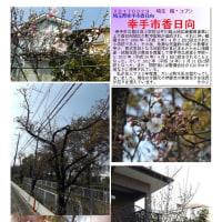 埼玉-580 幸手市香日向