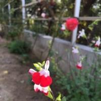 12月の庭。。。その1