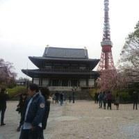 さくらが咲くころ増上寺へ