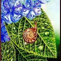 色鉛筆画355 (紫陽花とカタツムリ)