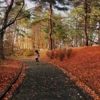 晩秋ロードを駆けてゆく。