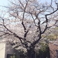 『私の木』2017年