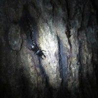 夜の雑木林