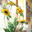 六日の菖蒲十日の菊