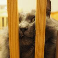 猫の日は過ぎましたが。