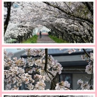桜トンネルの散歩