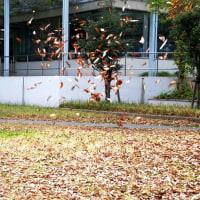 落ち葉と遊ぶ