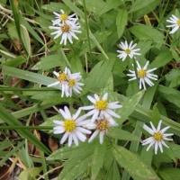 雲月山の草花
