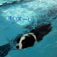 プール やればできるコ☆~ドッグリゾートWoof