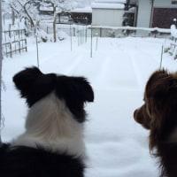 びっくりの積雪。。。