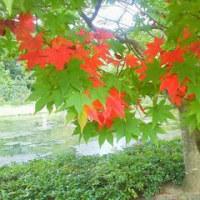 昭和記念公園(160930)