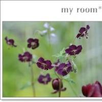 黒花フウロソウと、、白い、、花と、、。