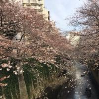桜 2017 (ば)