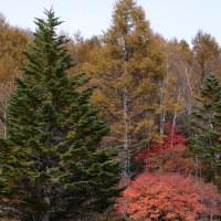 この辺は、秋から冬への準備です。