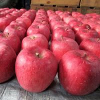 野中りんご支会りんご品評会(11月22日)