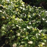 冬枯れの庭に謎の植物が育つ