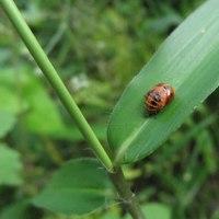 昆虫に良く出会った日:自信ないが多分ヤブキリ、ヤマトクロスジヘビトンボ、キシノウエトタテグモ