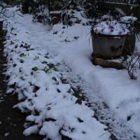 雪が積もってました。