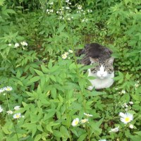 ฅ(●ↀωↀ●)✧ ・・・★ ฅฅฅ・・・遠くから、猫ッ視線・3