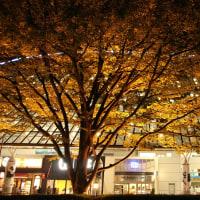 紅葉のはじまり@東京ドーム