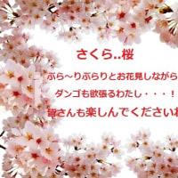 春爛漫の季節・・・!