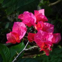 温室の花が綺麗(咲くやこの花館1月12日)