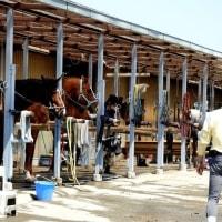 伝統ある「座間近代乗馬クラブ」