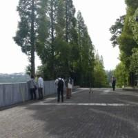 於大公園の花 : エンゼルトランペット ・・・ 東浦町街並み記録メンバーが30カ所を巡って記録していました。