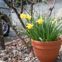 そろそろと、春。