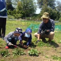 いちご大福作りイベント&農園見学ツアー