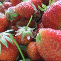 季節酵母パン『苺の目覚め』販売開始します。個数制限販売ですがどうぞよろしくお願いいたします。