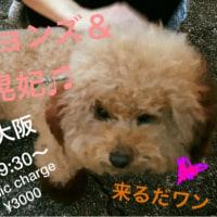 明日7日の夜はラグタイム大阪で歌ってます♫  来てね〜〜