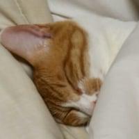 添い寝も良いですが、夜が怖いなあ?・・(^◇^)